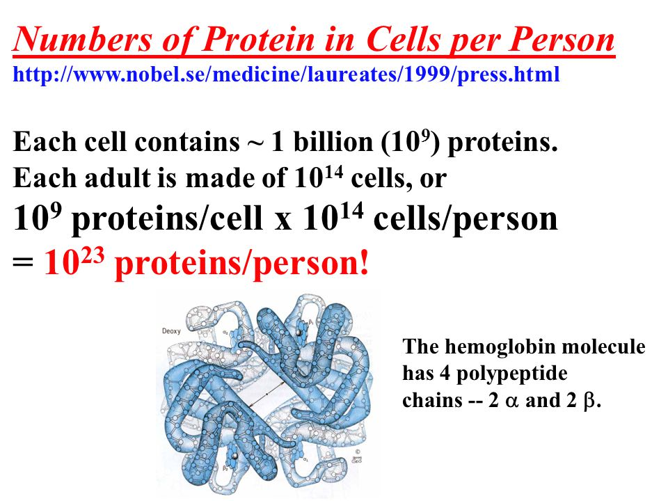 Number of Lipid per Cell per Person Each cell plasma membrane is made of ~200 million lipids.