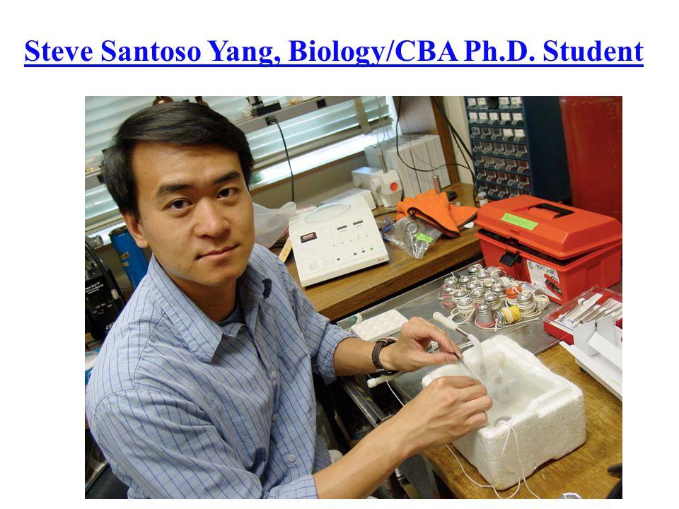 Steve Santoso Yang, Biology/CBA Ph.D. Student