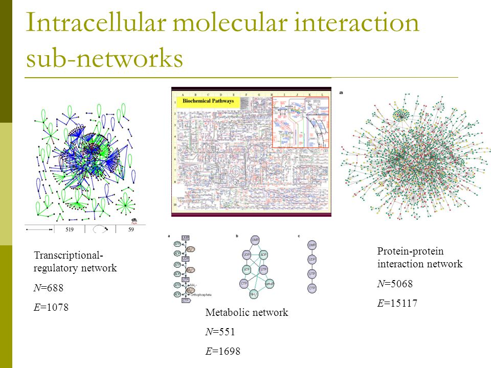Intracellular molecular interaction sub-networks Protein-protein interaction network N=5068 E=15117 Transcriptional- regulatory network N=688 E=1078 Metabolic network N=551 E=1698
