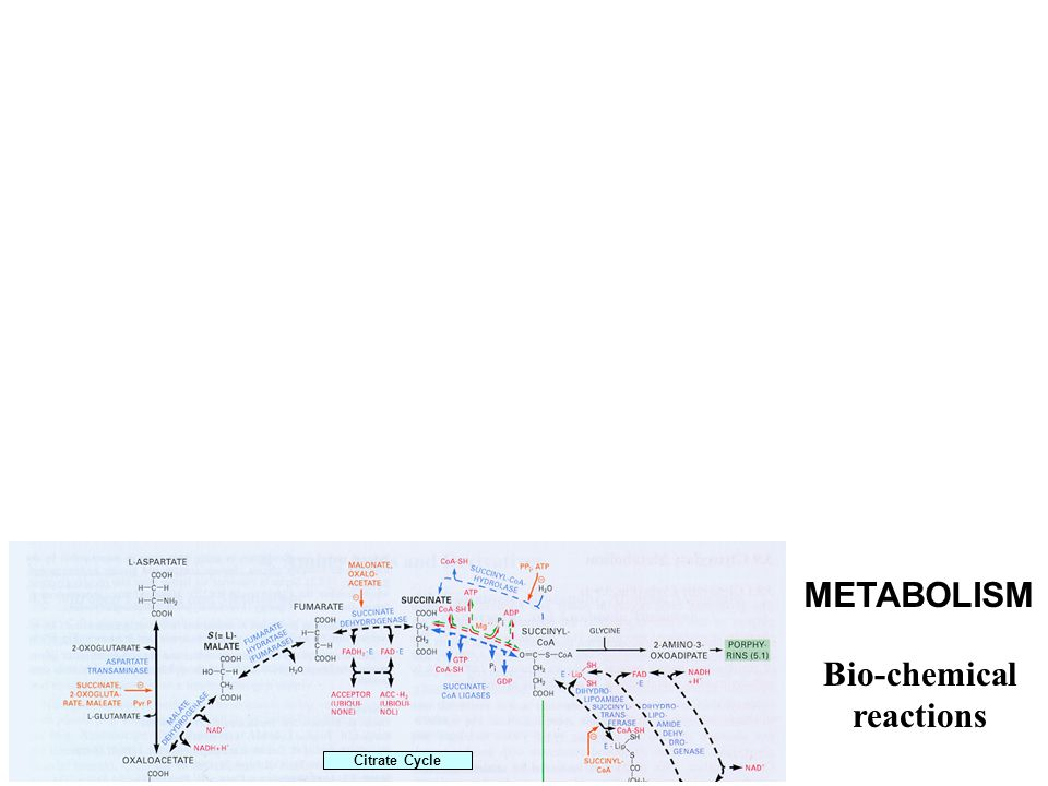 Citrate Cycle METABOLISM Bio-chemical reactions