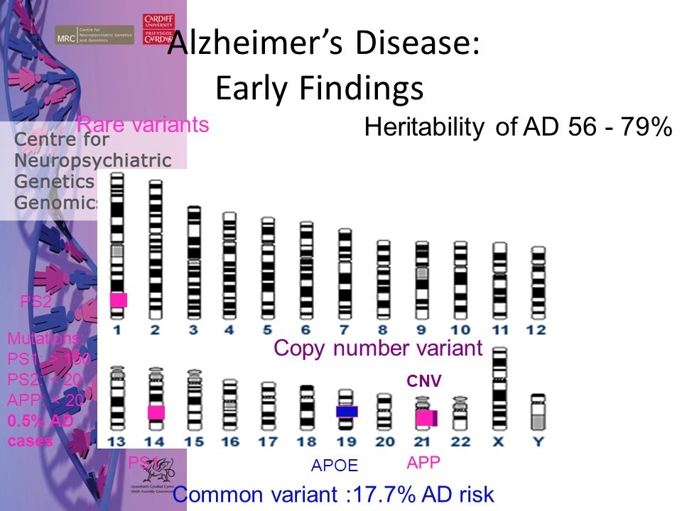 Alzheimer's Disease: Early Findings APOE APP PS1 PS2 Mutations: PS1: > 150 PS2: < 20 APP: < 20 0.5% AD cases Rare variants Copy number variant CNV Com