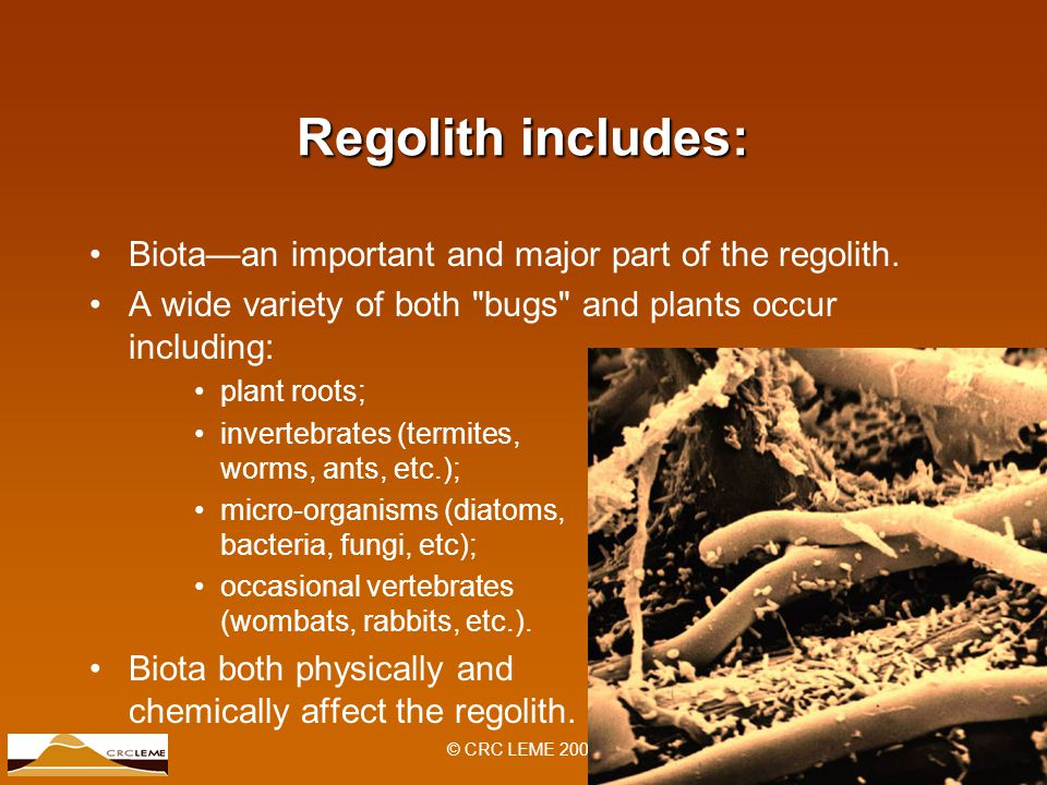 © CRC LEME 2007 Regolith includes: Biota—an important and major part of the regolith.