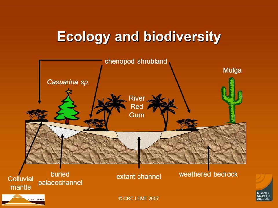 © CRC LEME 2007 Ecology and biodiversity River Red Gum Mulga Casuarina sp.