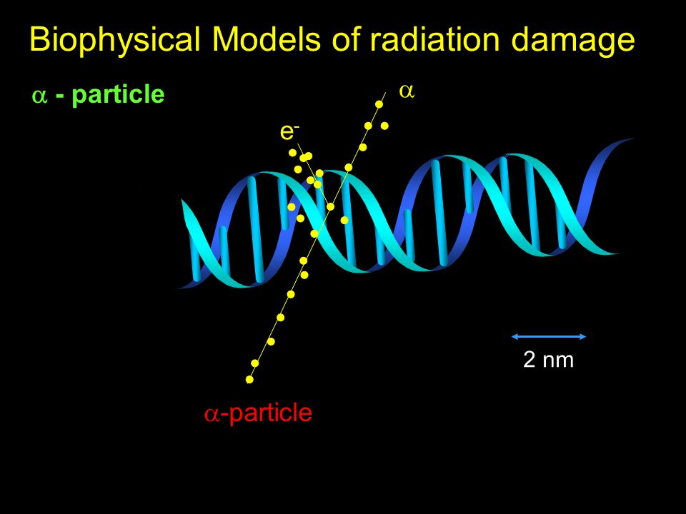  - particle Biophysical Models of radiation damage  -particle  e-e- 2 nm