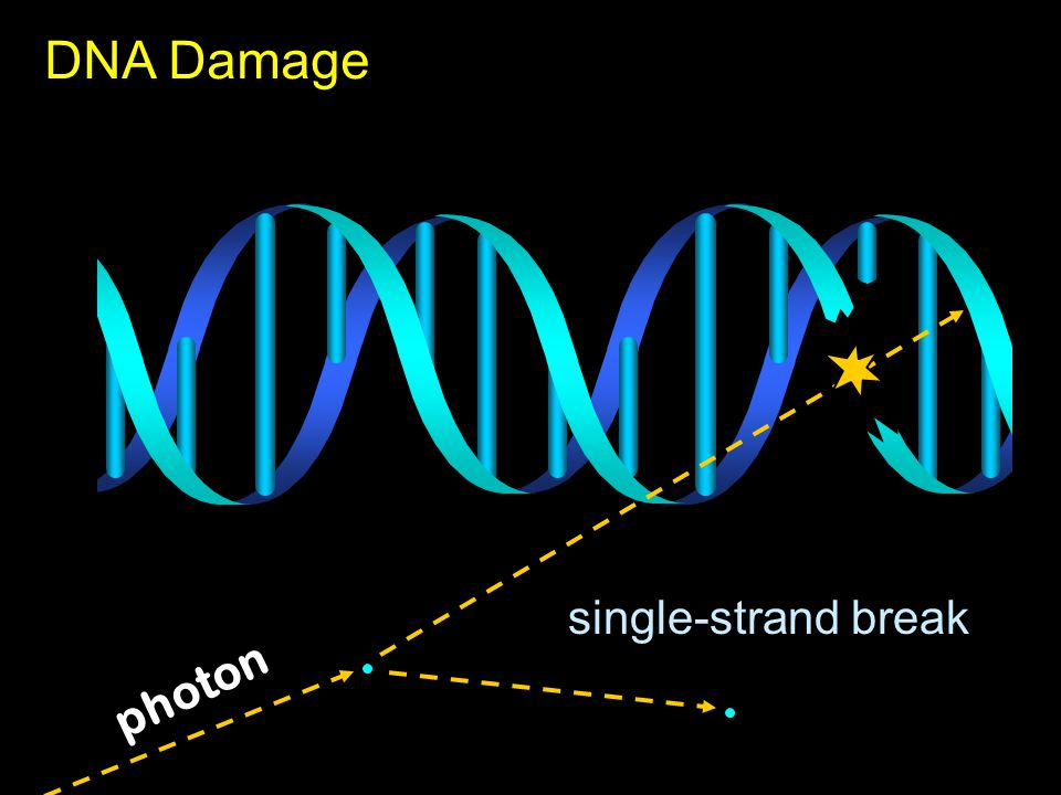 photon single-strand break DNA Damage