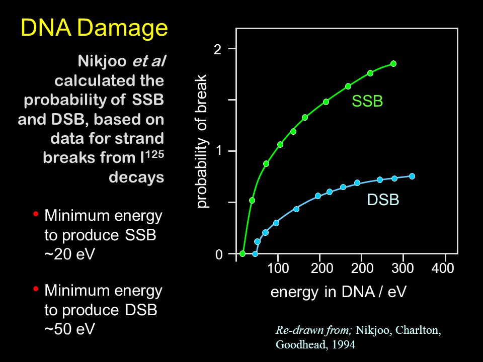 DNA Damage 0 1 2 100200 300400 probability of break energy in DNA / eV SSB DSB Nikjoo et al calculated the probability of SSB and DSB, based on data for strand breaks from I 125 decays Minimum energy to produce SSB ~20 eV Minimum energy to produce DSB ~50 eV Re-drawn from; Nikjoo, Charlton, Goodhead, 1994