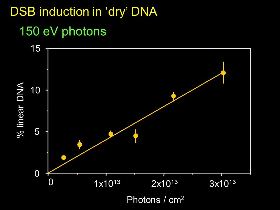 150 eV photons DSB induction in 'dry' DNA % linear DNA 0 1x10 13 2x10 13 3x10 13 0 5 10 15 Photons / cm 2