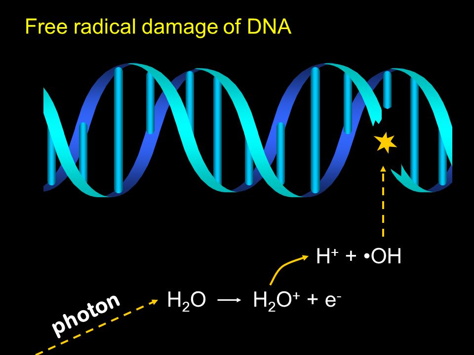 Free radical damage of DNA photon H 2 O H 2 O + + e - H + + OH
