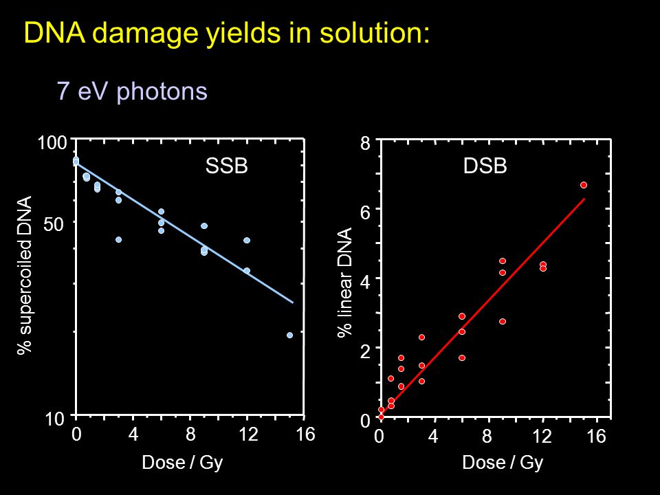 DNA damage yields in solution: 0481216 10 100 % supercoiled DNA Dose / Gy 50 SSB 0481216 0 2 4 6 8 % linear DNA Dose / Gy DSB 7 eV photons