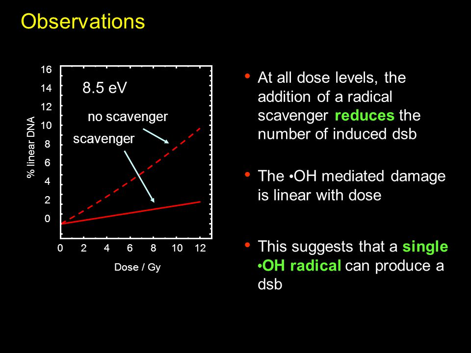024681012 Dose / Gy 8.5 eV 0 2 4 6 8 10 12 14 16 % linear DNA no scavenger scavenger Observations At all dose levels, the addition of a radical scavenger reduces the number of induced dsb The OH mediated damage is linear with dose This suggests that a single OH radical can produce a dsb