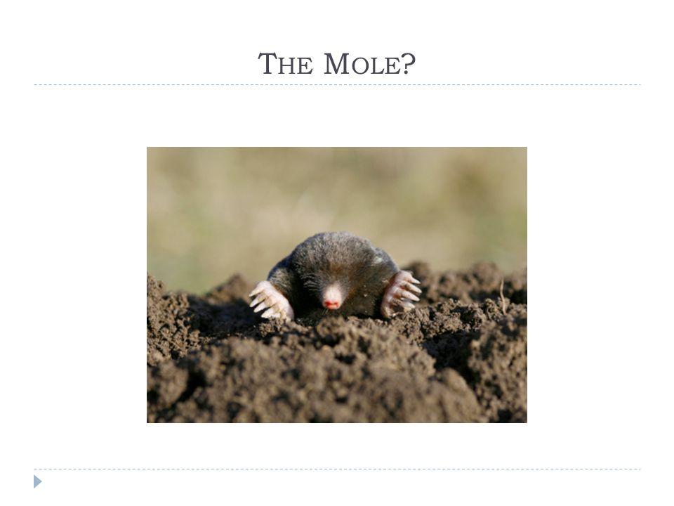 The Mole?