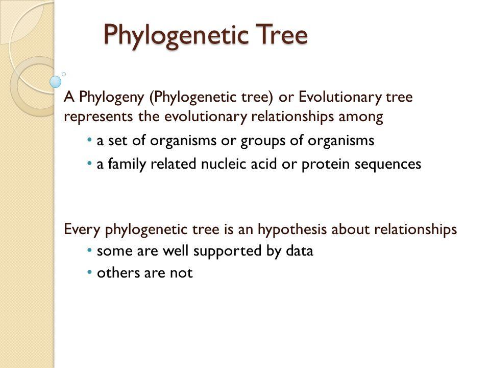Phylogenetic Tree A Phylogeny (Phylogenetic tree) or Evolutionary tree represents the evolutionary relationships among a set of organisms or groups of