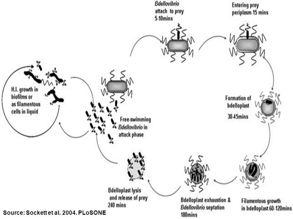 Source: Sockett et al. 2004. PLoSONE