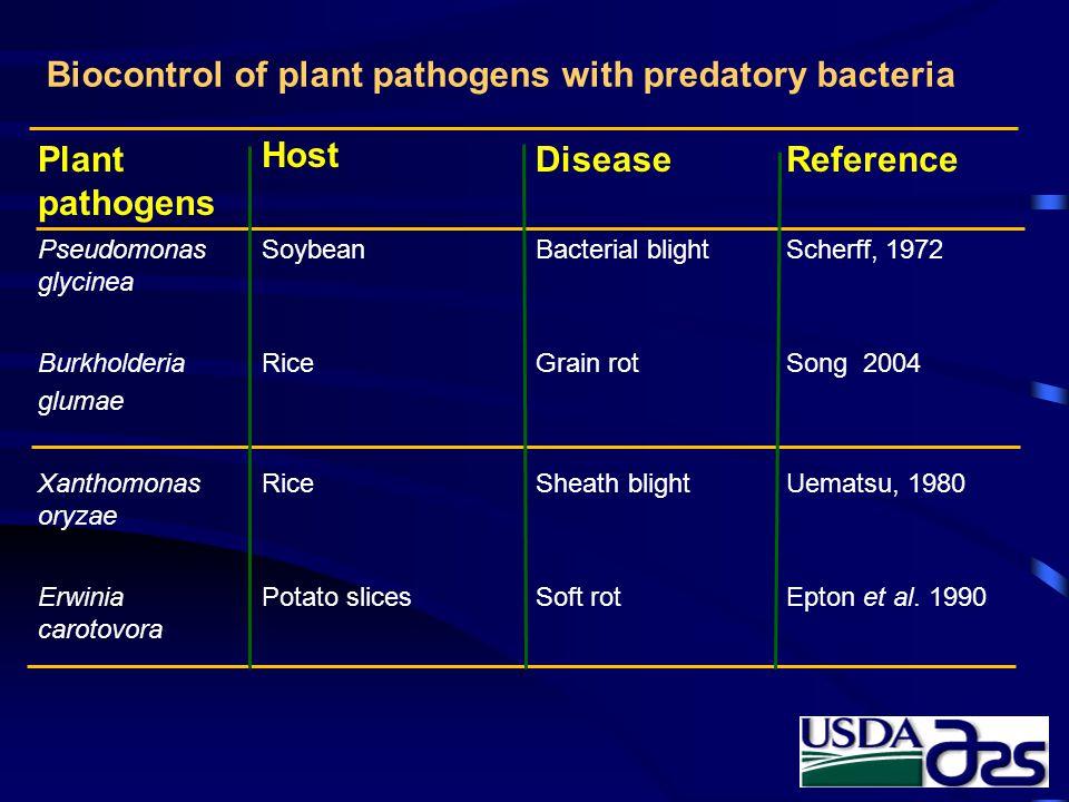 Biocontrol of plant pathogens with predatory bacteria Plant pathogens Host DiseaseReference Pseudomonas glycinea SoybeanBacterial blightScherff, 1972 Burkholderia glumae RiceGrain rotSong 2004 Xanthomonas oryzae RiceSheath blight Uematsu, 1980 Erwinia carotovora Potato slicesSoft rot Epton et al.