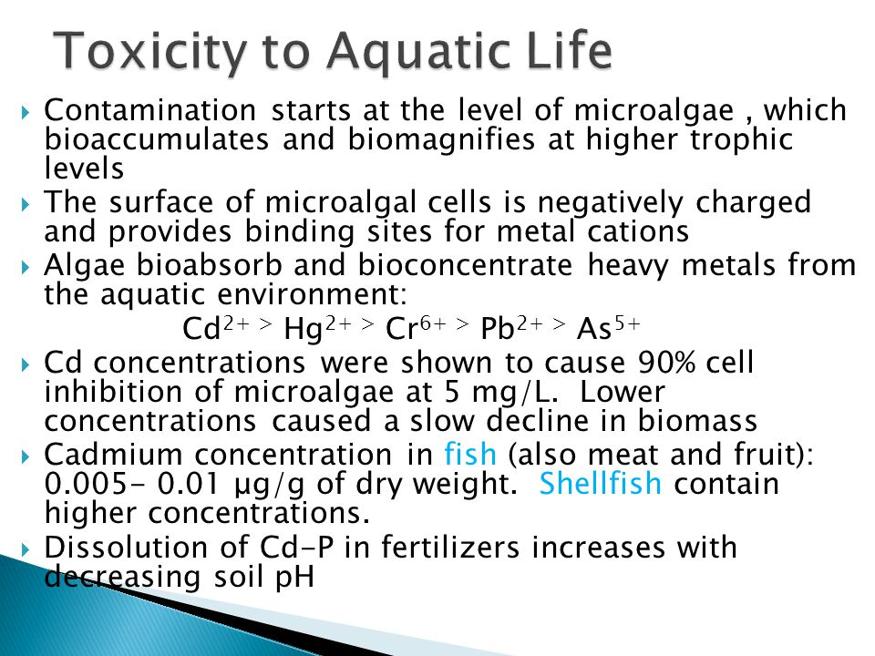  Contamination starts at the level of microalgae, which bioaccumulates and biomagnifies at higher trophic levels  The surface of microalgal cells is negatively charged and provides binding sites for metal cations  Algae bioabsorb and bioconcentrate heavy metals from the aquatic environment: Cd 2+ > Hg 2+ > Cr 6+ > Pb 2+ > As 5+  Cd concentrations were shown to cause 90% cell inhibition of microalgae at 5 mg/L.