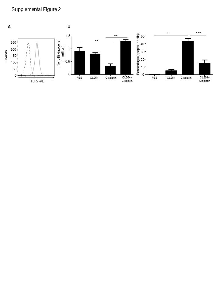 6000 4000 2000 0 14000 12000 10000 8000 PBS CL264 Cisplatin(100µM)Cisplatin(200µM) Cisplatin(300µM) CL264+Cisplatin(100µM)CL264+Cisplatin(200µM) CL264+Cisplatin(300µM) ns Tumor volume (mm 3 ) ** Supplemental Figure 3
