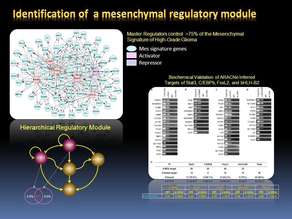 Mes signature genes Activator Repressor Biochemical Validation of ARACNe Inferred Targets of Stat3, C/EBPb, FosL2, and bHLH-B2 Master Regulators control >75% of the Mesenchymal Signature of High-Grade Glioma Hierarchical Regulatory Module