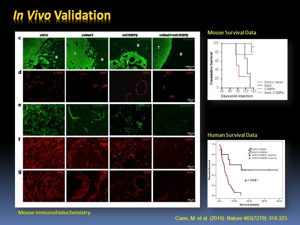 Control Vector Stat3- C/EBPb- Stat3-/C/EBPb- Human Survival Data Mouse Survival Data Mouse immunohistochemistry Carro, M.
