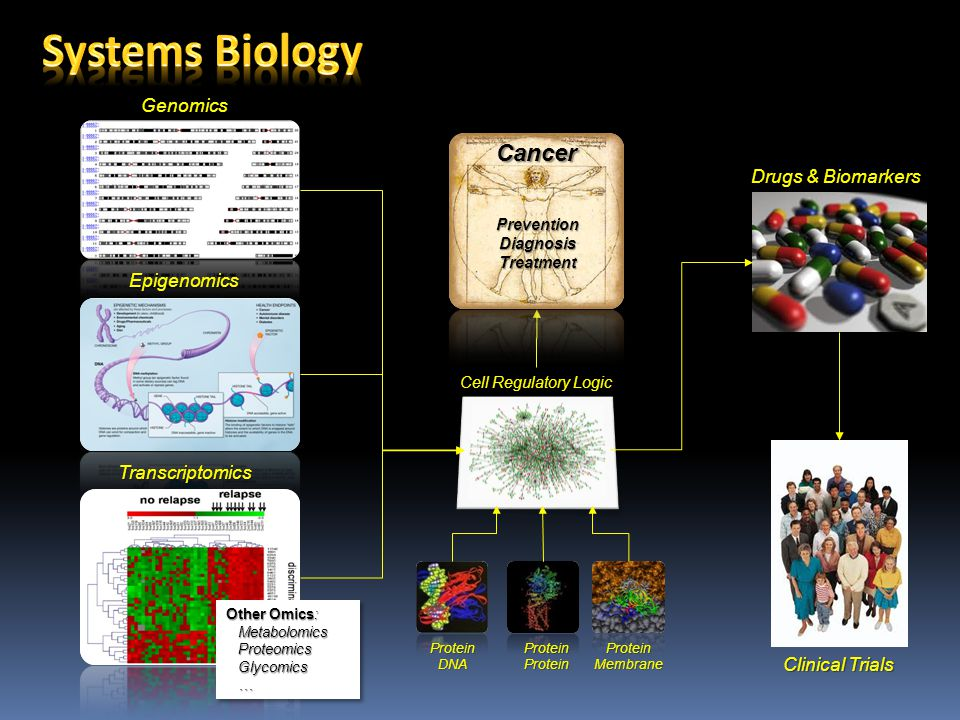 Genomics Epigenomics Cell Regulatory Logic ProteinProteinProteinMembraneProteinDNA Transcriptomics Other Omics: Metabolomics Metabolomics Proteomics Proteomics Glycomics Glycomics … Other Omics: Metabolomics Metabolomics Proteomics Proteomics Glycomics Glycomics … Drugs & Biomarkers Clinical Trials PreventionDiagnosisTreatment Cancer