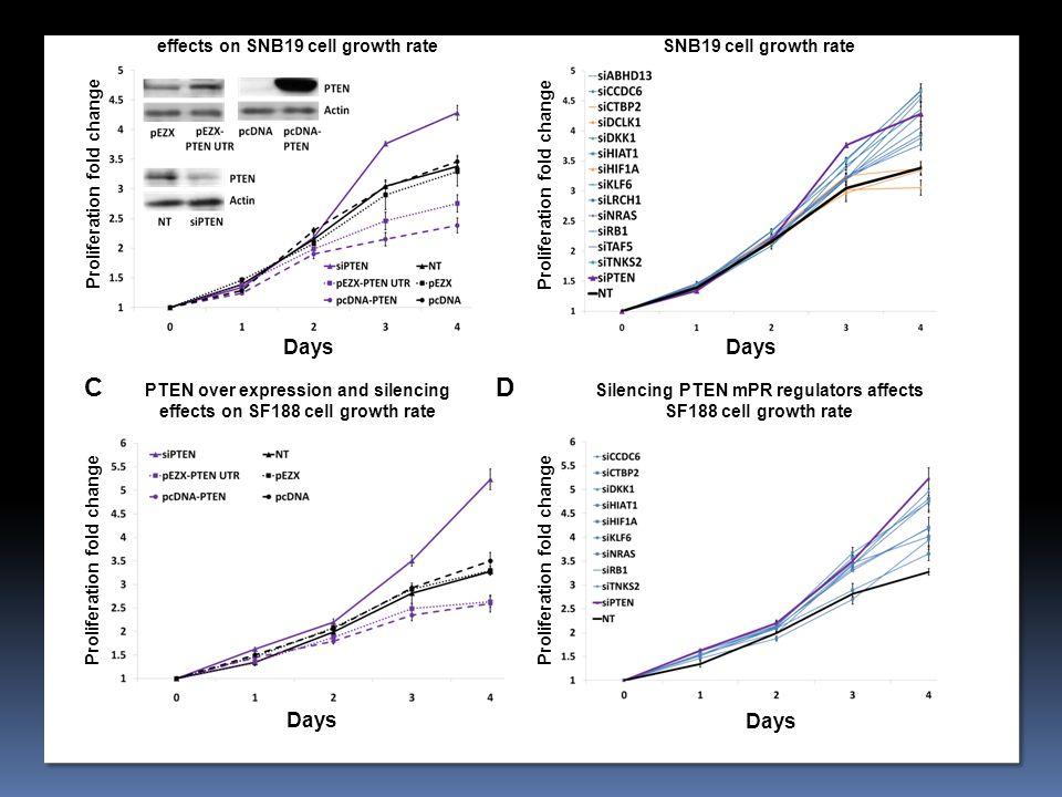 Silencing PTEN mPR regulators affects SNB19 cell growth rate Proliferation fold change Days PTEN over expression and silencing effects on SNB19 cell growth rate Proliferation fold change AB Days Silencing PTEN mPR regulators affects SF188 cell growth rate PTEN over expression and silencing effects on SF188 cell growth rate CD Proliferation fold change