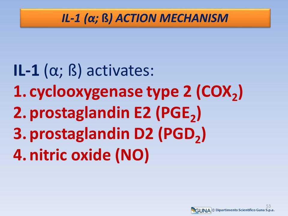IL-1 (α; ß) ACTION MECHANISM IL-1 (α; ß) activates: 1.cyclooxygenase type 2 (COX 2 ) 2.prostaglandin E2 (PGE 2 ) 3.prostaglandin D2 (PGD 2 ) 4.nitric oxide (NO) © Dipartimento Scientifico Guna S.p.a.