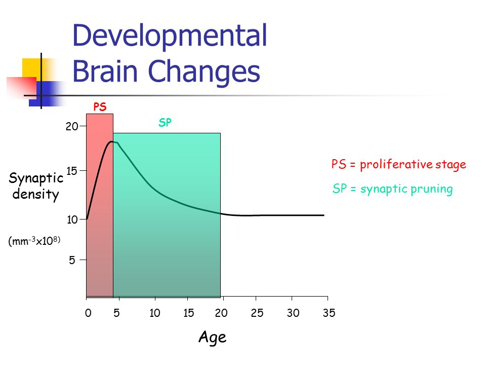 Developmental Brain Changes 50 10 1520253035 Age Synaptic density 5 10 15 20 (mm -3 x10 8) PS SP PS = proliferative stage SP = synaptic pruning