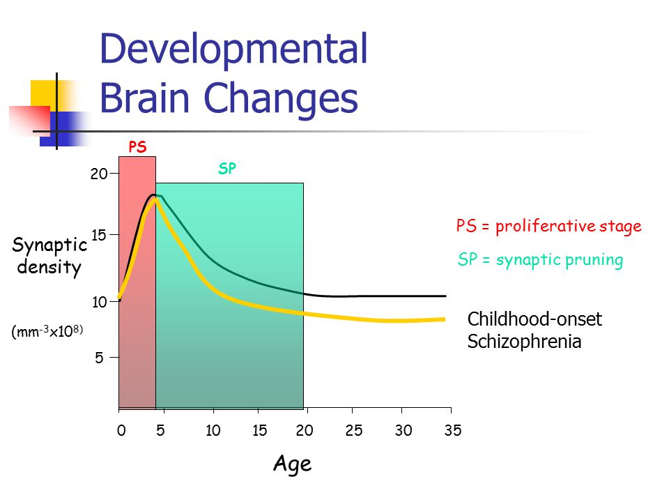 Developmental Brain Changes 50 10 1520253035 Age Synaptic density 5 10 15 20 (mm -3 x10 8) PS SP PS = proliferative stage SP = synaptic pruning Childh