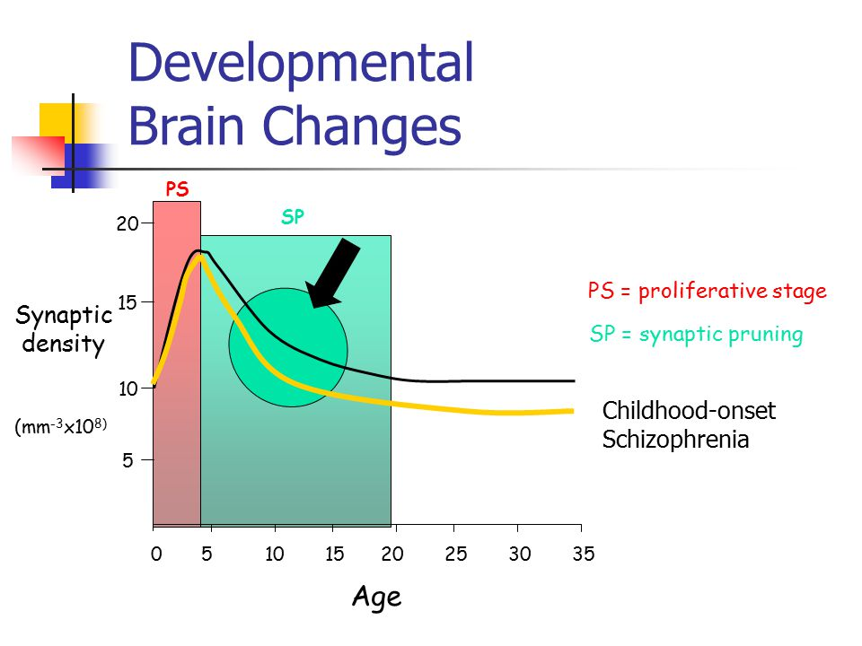 Developmental Brain Changes 50 10 1520253035 Age Synaptic density 5 10 15 20 (mm -3 x10 8) PS SP PS = proliferative stage SP = synaptic pruning Childhood-onset Schizophrenia