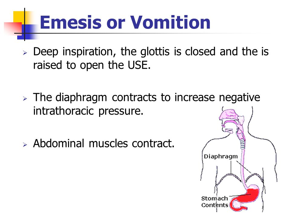 Emesis or Vomition  Deep inspiration, the glottis is closed and the is raised to open the USE.  The diaphragm contracts to increase negative intrath