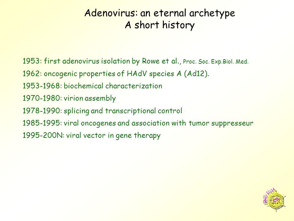 Adenovirus: an eternal archetype A short history 1953: first adenovirus isolation by Rowe et al., Proc.