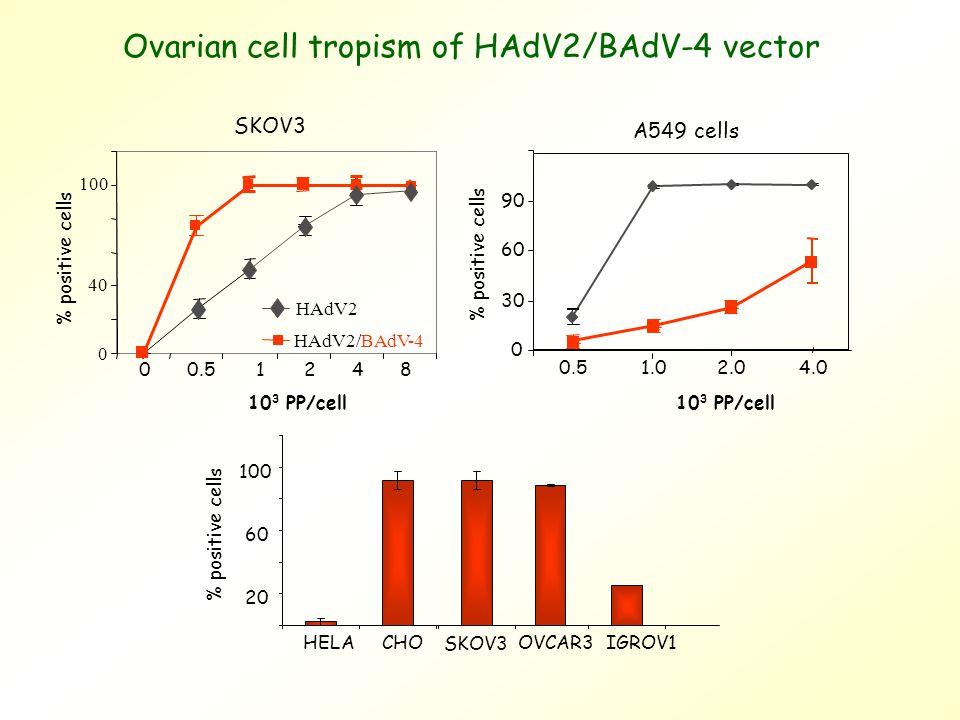 Ovarian cell tropism of HAdV2/BAdV-4 vector 0 40 100 00.51248 % positive cells SKOV3 HAdV2 HAdV2/BAdV-4 A549 cells 0 30 60 90 0.51.02.04.0 10 3 PP/cell % positive cells 10 3 PP/cell 20 60 100 HELACHOOVCAR3IGROV1 % positive cells SKOV3