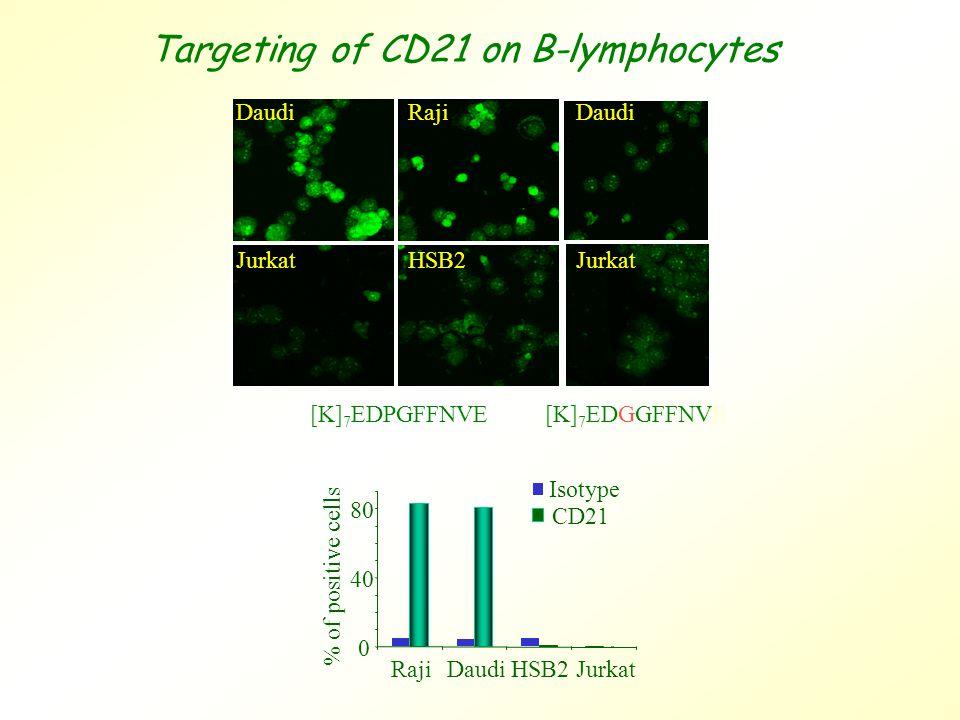0 40 80 RajiDaudiHSB2Jurkat % of positive cells Isotype CD21 Daudi Jurkat Raji HSB2 [K] 7 EDPGFFNVE [K] 7 EDGGFFNVE Daudi Jurkat Targeting of CD21 on B-lymphocytes