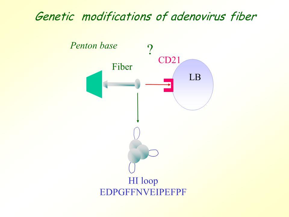 LB HI loop EDPGFFNVEIPEFPF Penton base Fiber CD21 Genetic modifications of adenovirus fiber