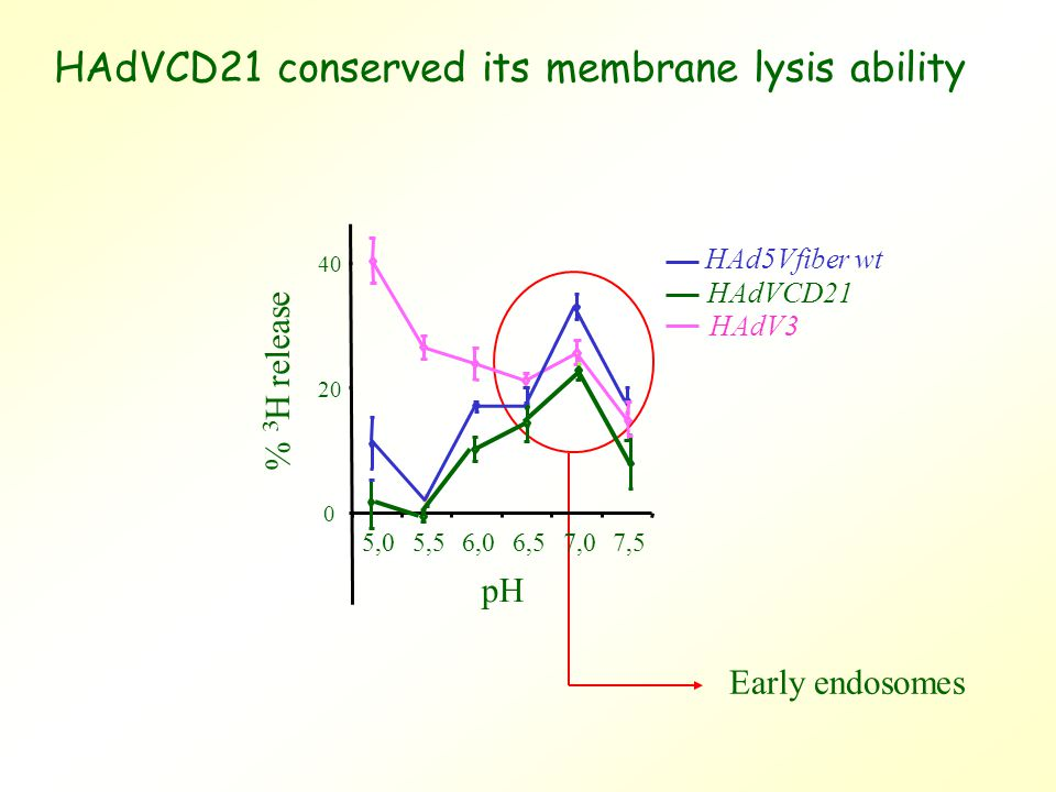 HAdVCD21 conserved its membrane lysis ability Early endosomes 0 20 40 5,05,56,06,57,07,5 % 3 H release pH HAd5Vfiber wt HAdV3 HAdVCD21