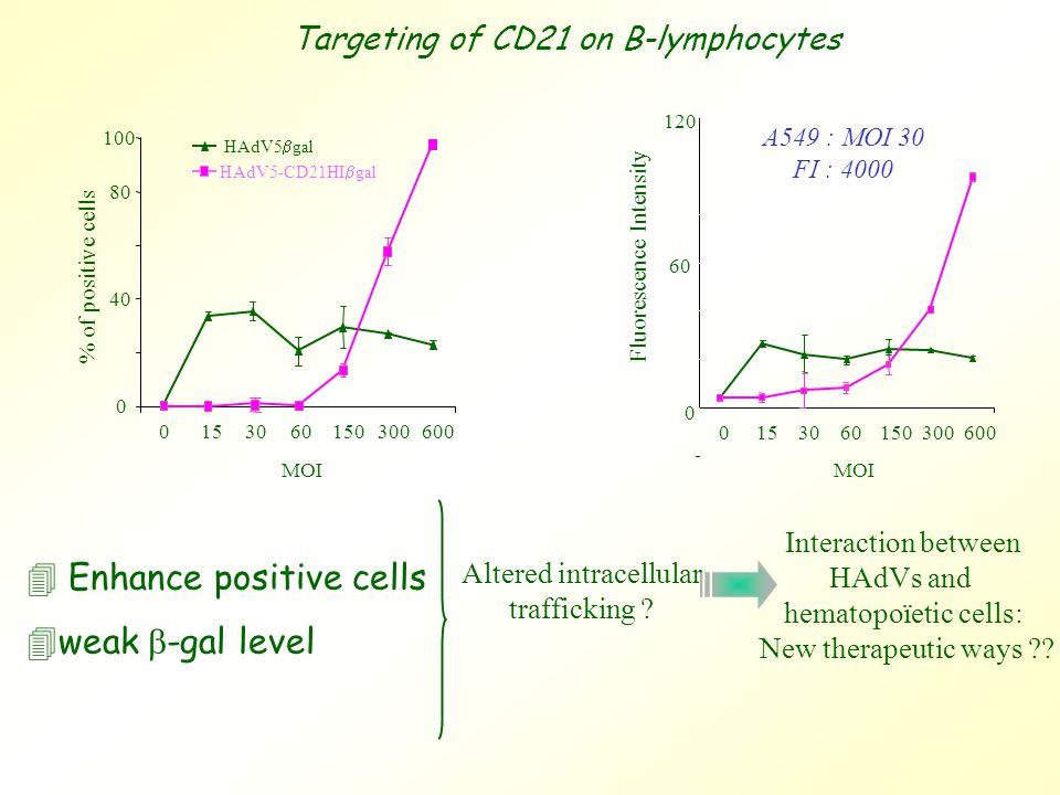 4 Enhance positive cells  weak  -gal level Altered intracellular trafficking .