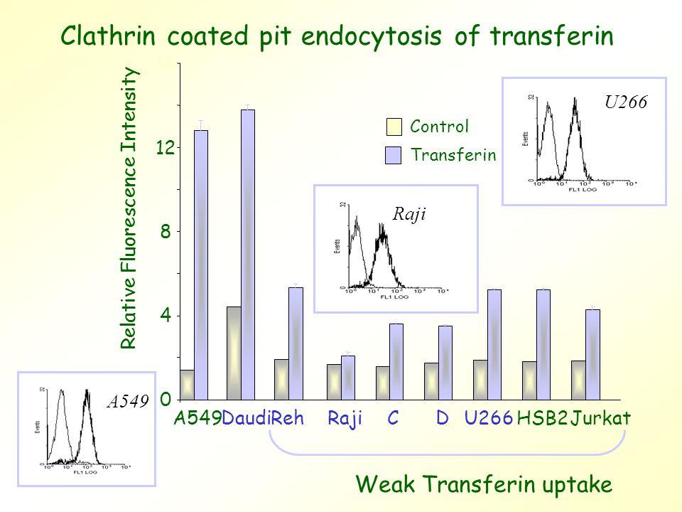 0 4 8 12 16 A549 Reh DaudiRajiCDU266HSB2Jurkat Relative Fluorescence Intensity Weak Transferin uptake Control Transferin Clathrin coated pit endocytosis of transferin A549 U266 Raji