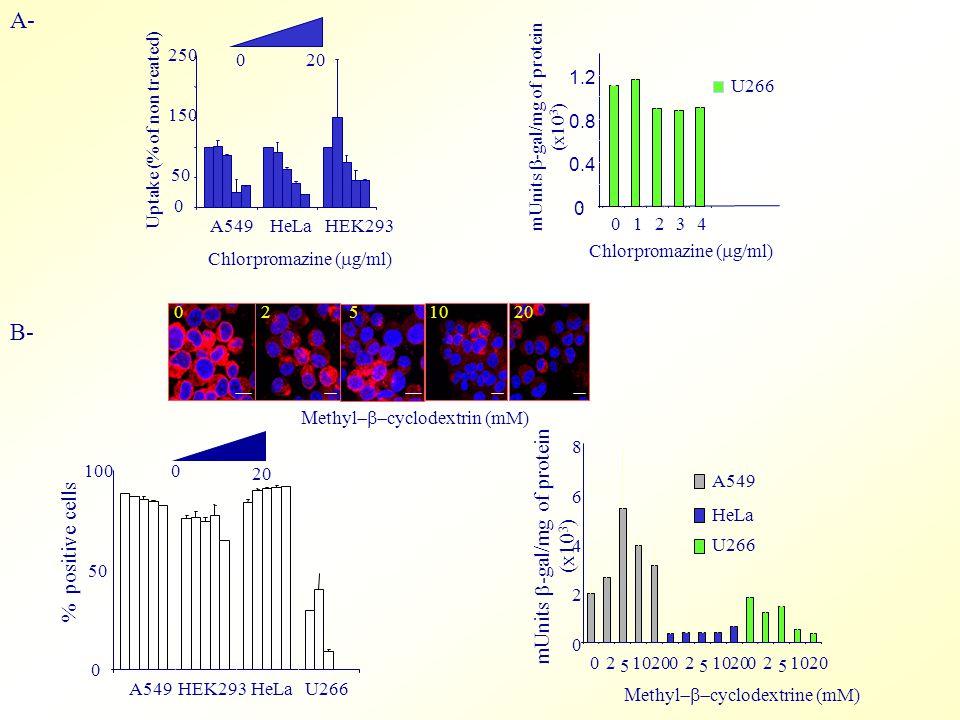 A- B- 0 50 100 A549HEK293HeLaU266 % positive cells mUnits  -gal/mg of protein (x10 3 ) 0 2 4 6 8 2 5 10200  ethyl  cyclodextrine (mM) A549 HeLa U266 2 5 102002 5 10200 0 50 150 250 A549HeLaHEK293 Chlorpromazine (  g/ml) Uptake (% of non treated) 0 20 0 0.4 0.8 1.2 01234 Chlorpromazine (  g/ml) U266 mUnits  -gal/mg of protein (x10 3 ) 02510  ethyl  cyclodextrin (mM) 20 0