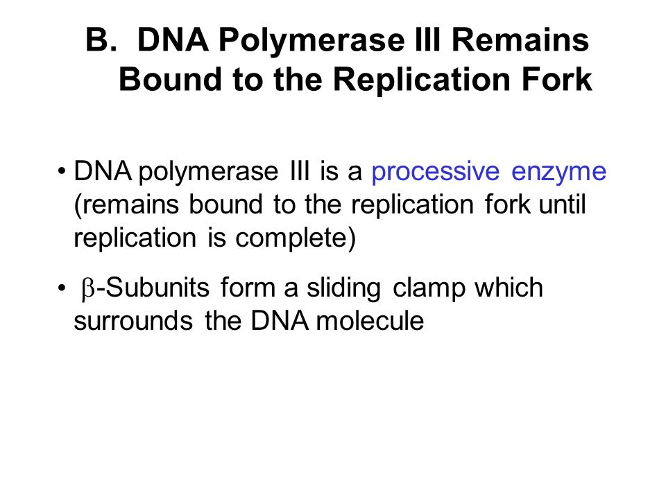 B. DNA Polymerase III Remains Bound to the Replication Fork DNA polymerase III is a processive enzyme (remains bound to the replication fork until rep