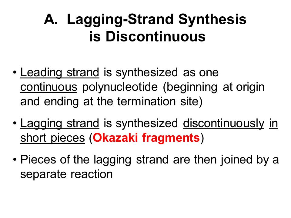 A. Lagging-Strand Synthesis is Discontinuous Leading strand is synthesized as one continuous polynucleotide (beginning at origin and ending at the ter