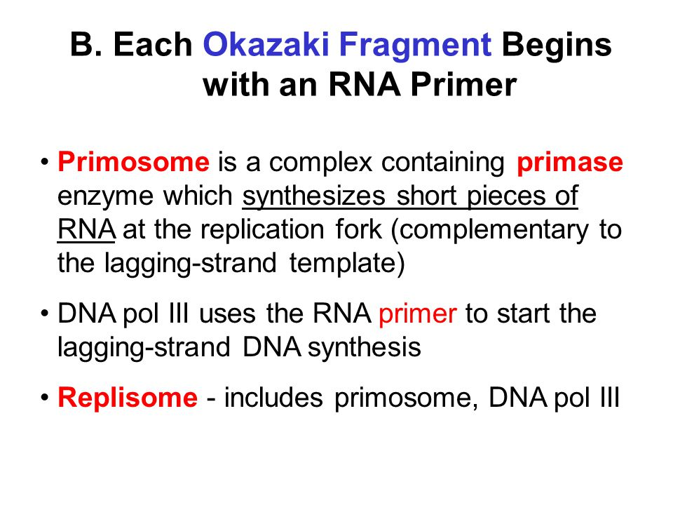 B. Each Okazaki Fragment Begins with an RNA Primer Primosome is a complex containing primase enzyme which synthesizes short pieces of RNA at the repli
