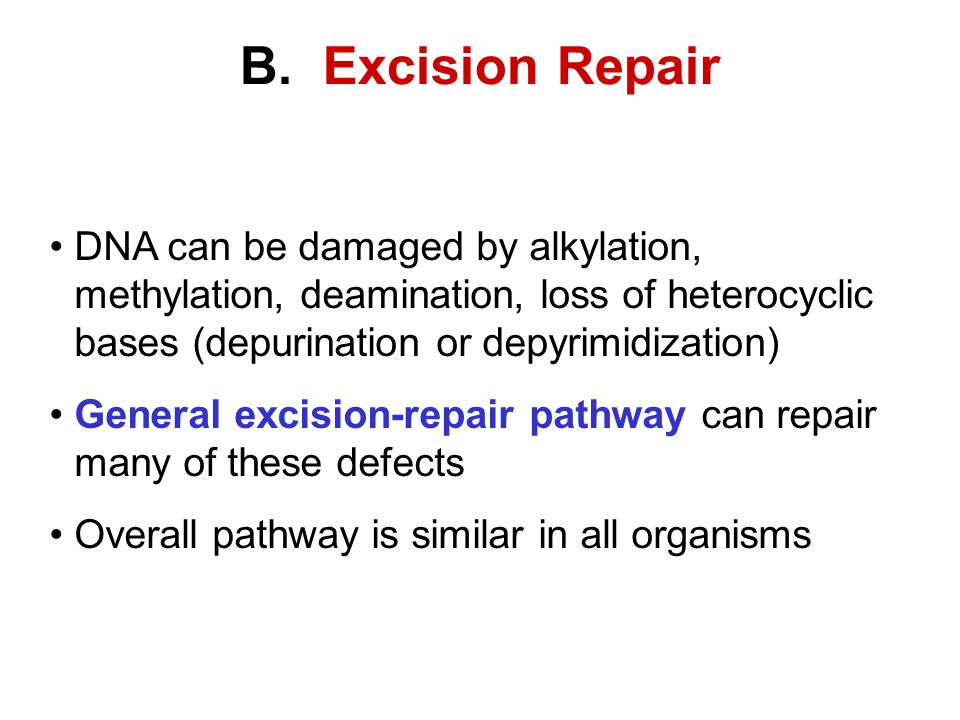 B. Excision Repair DNA can be damaged by alkylation, methylation, deamination, loss of heterocyclic bases (depurination or depyrimidization) General e