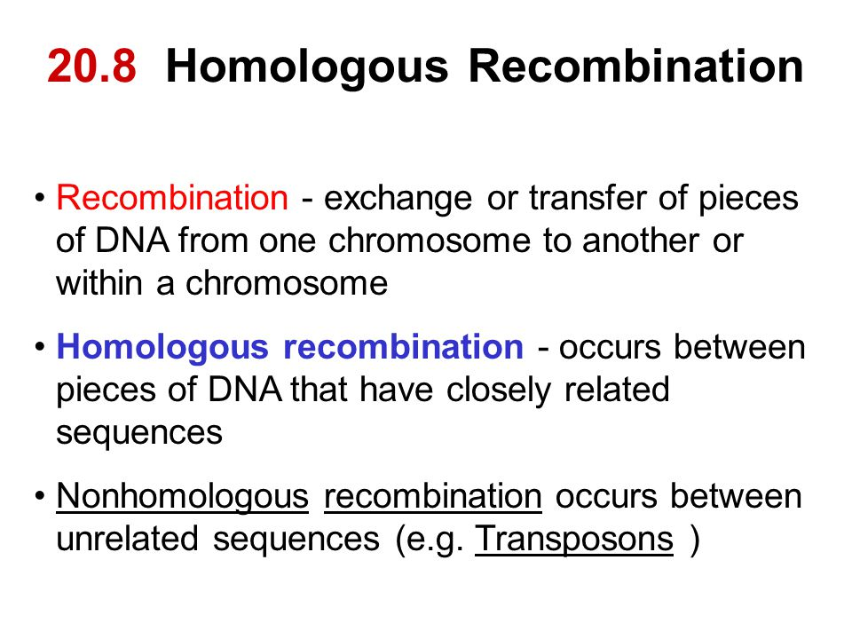20.8 Homologous Recombination Recombination - exchange or transfer of pieces of DNA from one chromosome to another or within a chromosome Homologous r