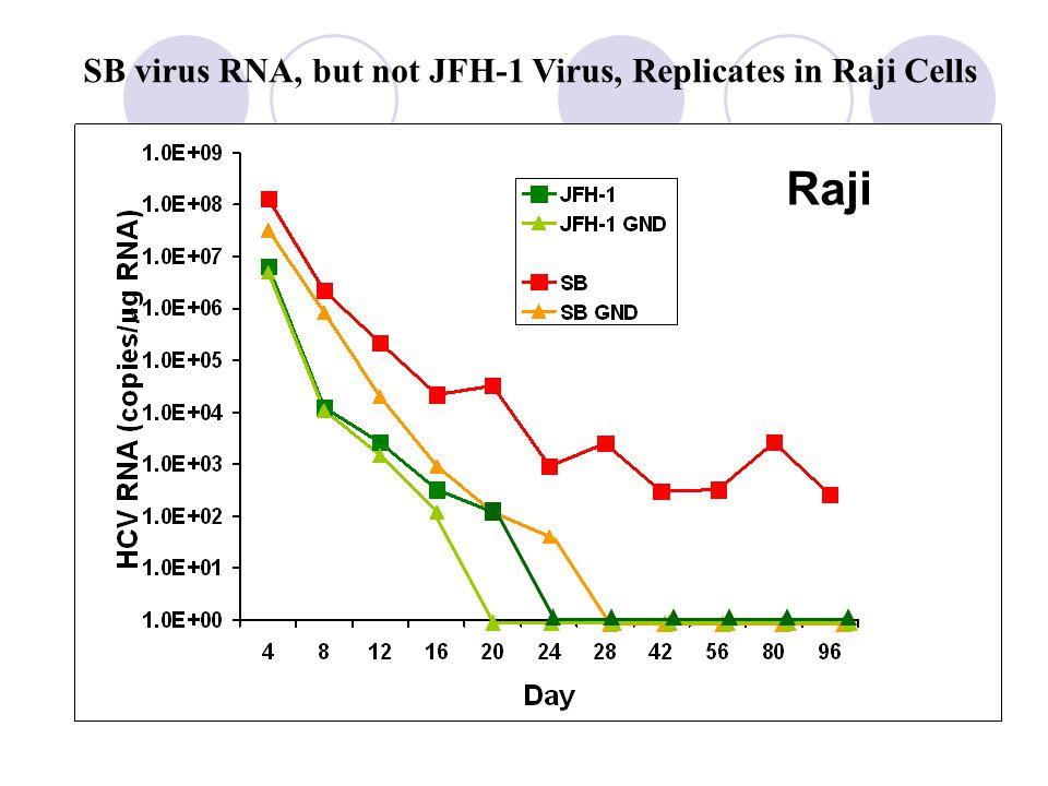 SB virus RNA, but not JFH-1 Virus, Replicates in Raji Cells   Raji
