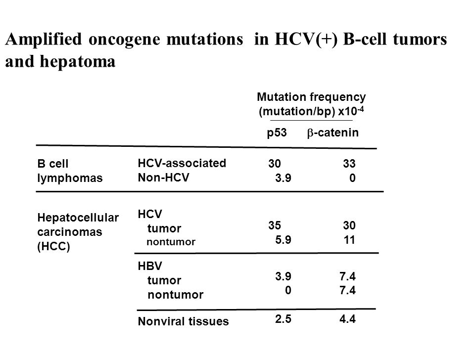 HCV induces a mutator phenotype HCV infection causes a 5-10-fold increase in mutation frequency of cellular genes, including immunoglobulin (Ig) and somatic genes, e.g., p53 or  -catenin genes.