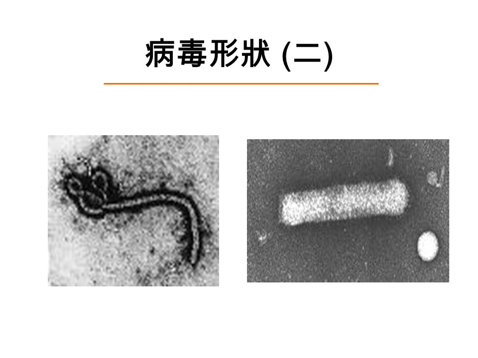 病毒形狀 ( 二 )