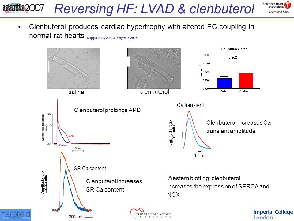 Reversing HF: LVAD & clenbuterol Clenbuterol produces cardiac hypertrophy with altered EC coupling in normal rat hearts Soppa et al, Am.