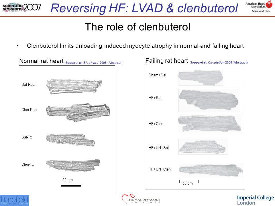 Reversing HF: LVAD & clenbuterol The role of clenbuterol Clenbuterol limits unloading-induced myocyte atrophy in normal and failing heart Clen-Tx Sal-Tx Clen-Rec Sal-Rec 50 µm 50  m Sham+Sal HF+Sal HF+Clen HF+UN+Sal HF+UN+Clen Normal rat heart Soppa et al, Biophys J 2005 (Abstract) Failing rat heart Soppa et al, Circulation 2006 (Abstract)