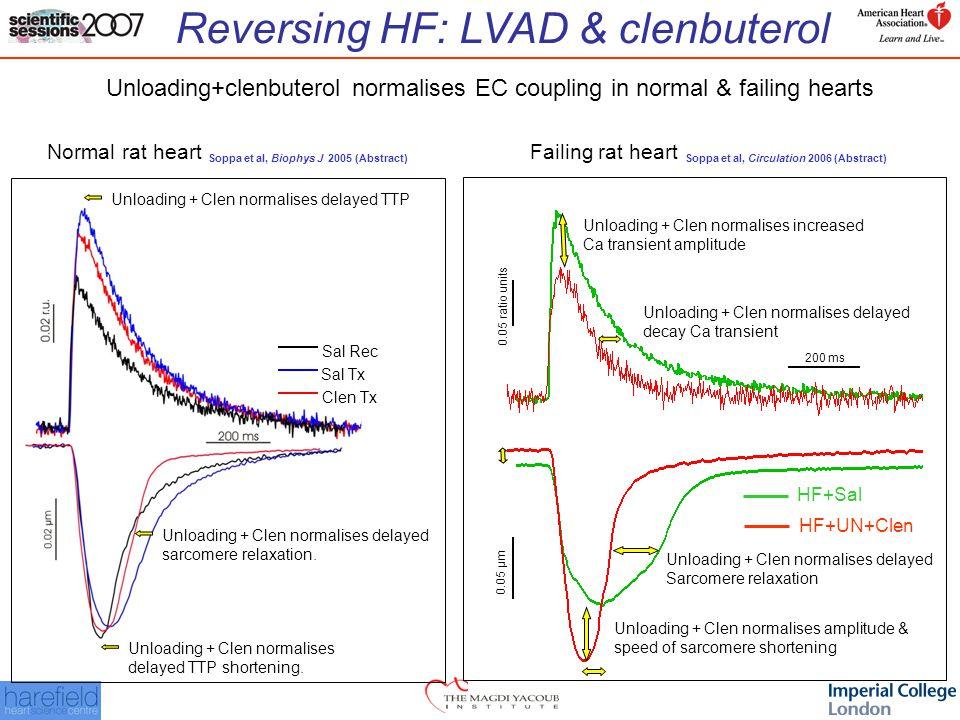 Reversing HF: LVAD & clenbuterol 0.05 ratio units 0.05 µm 200 ms HF+Sal HF+UN+Clen Unloading+clenbuterol normalises EC coupling in normal & failing hearts Unloading + Clen normalises delayed TTP shortening.