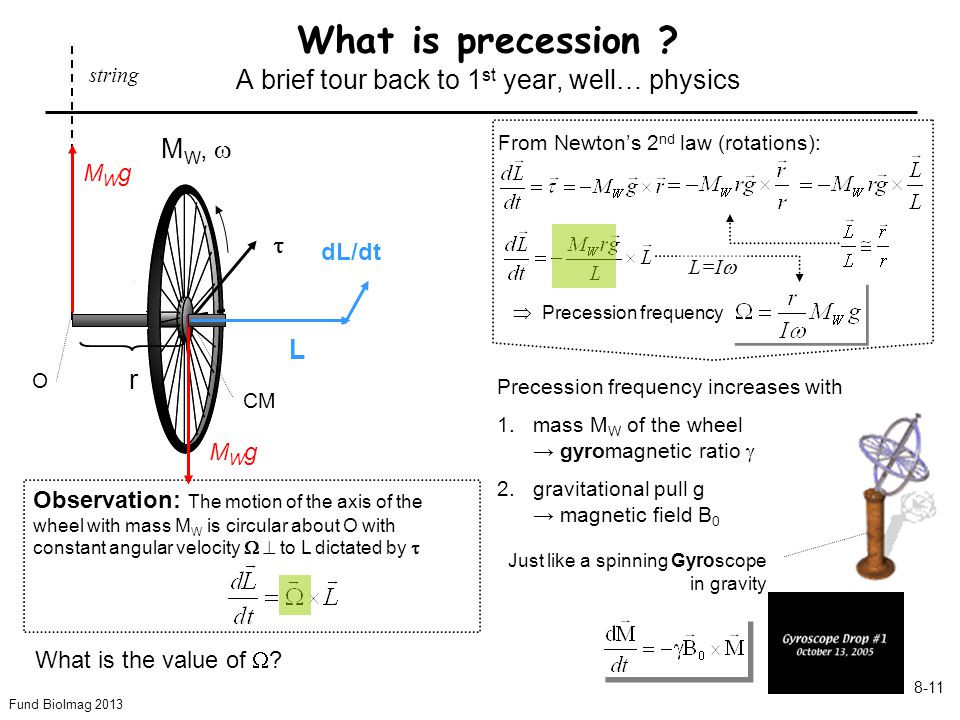 Fund BioImag 2013 8-11 What is precession .