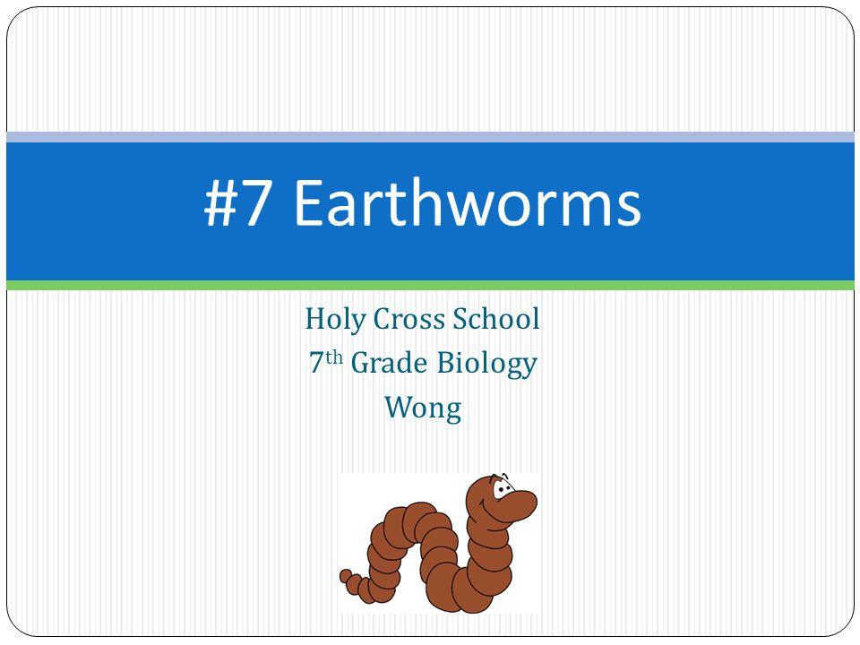 #7 Earthworms Holy Cross School 7 th Grade Biology Wong